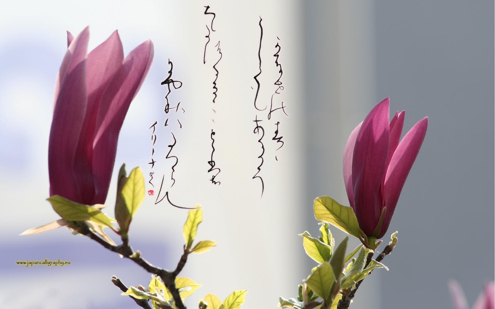 Japanese Calligraphy Wallpaper Japanese Calligraphy