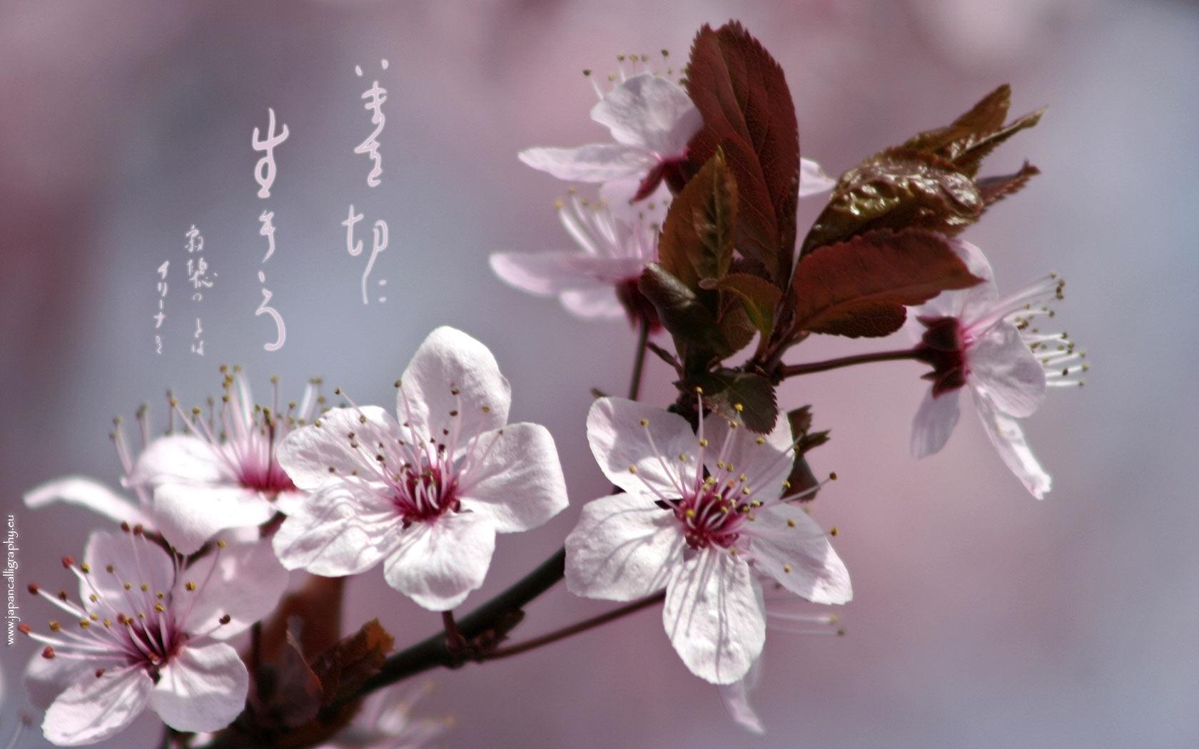 Japanese Calligraphy Wallpaper Spring Japanese Calligraphy