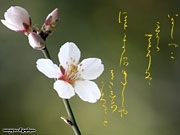 Calligraphy  wallpapers Spring