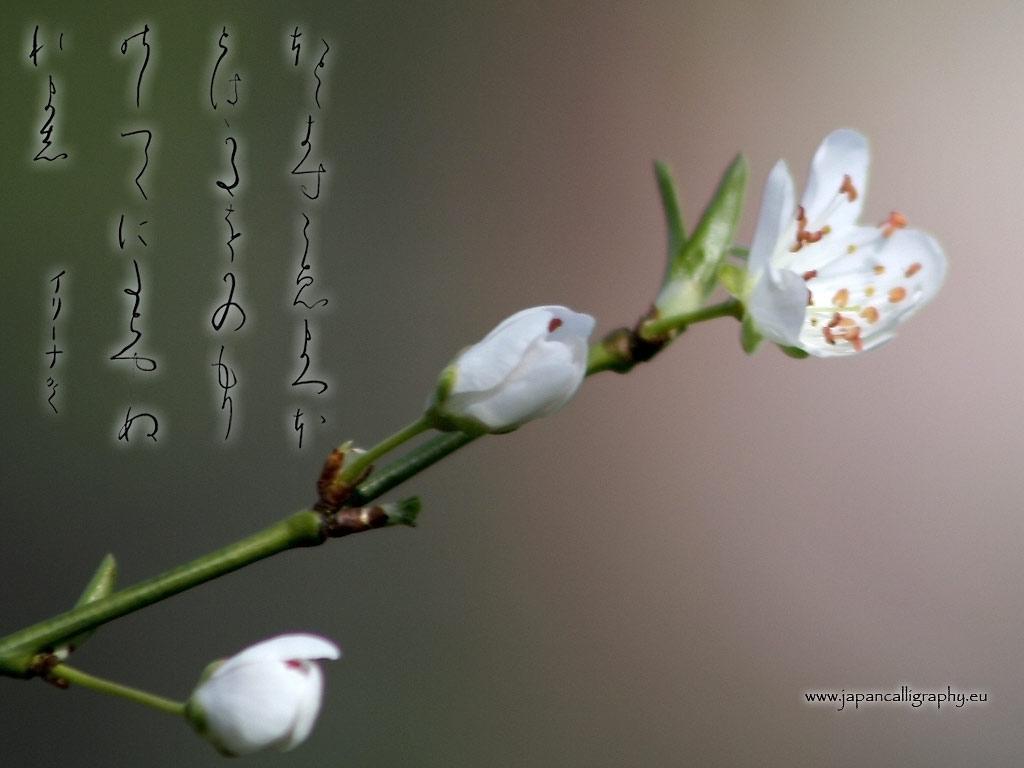 Sfondi ideogrammi giapponesi